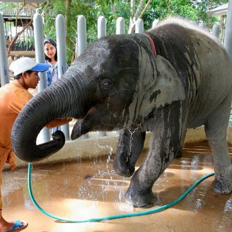 World's First Elephant Hospital in Thailand