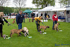 20100513-Bullmastiff-Clubmatch_30856.jpg