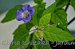 Glória Ishizaka - Jardim Botânico Nagai - Osaka 46