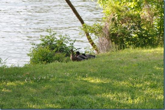04-14-13 Lake Livingston 02