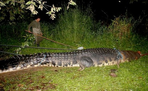 Biggest Crocodile Ever Caught 01