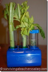 colored celery, celery experiment, science fair project