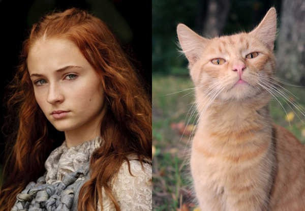 E se os personagens de Game of Thrones fossem gatos 10