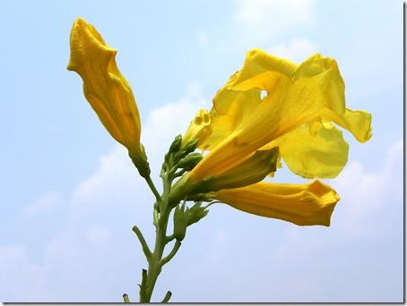 flori-poze
