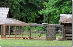 Hen House at the Farm