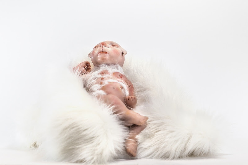 bebe-humano-cachorro-deubandeira-05