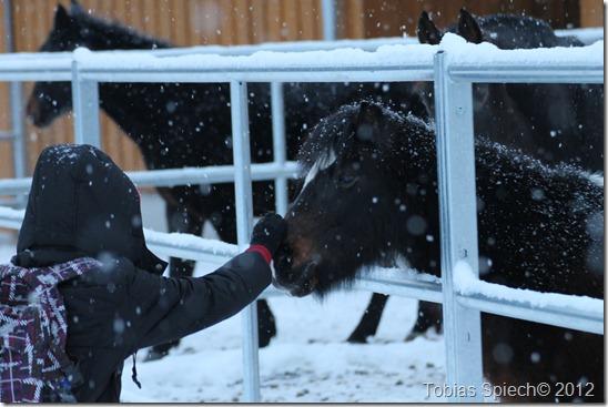 Pony Moonfleet im Schnee