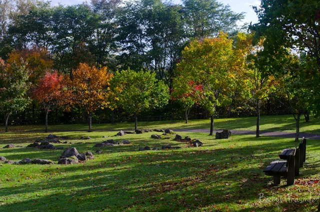 2013-10-12 Furano Fall Colors 013