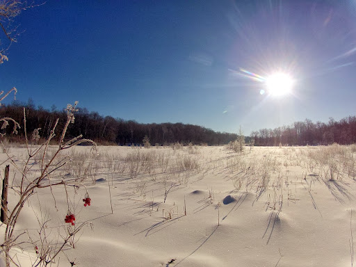 Beautiful February sun shining over a frosted  Kohlepp's slough