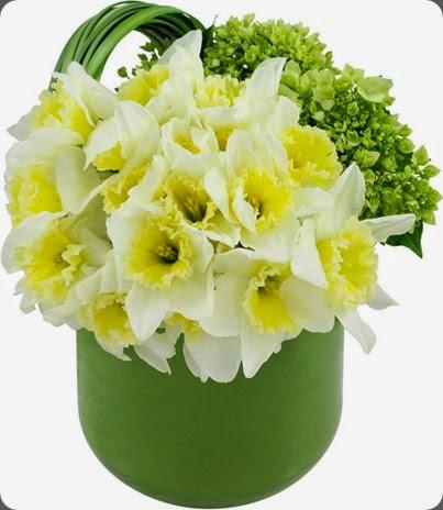 daffodil winston flowers 1979504_10152320379063536_1986365782_n