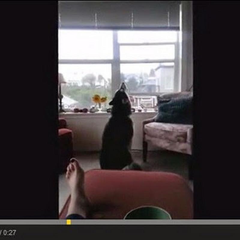 Σκύλος αντιγράφει τις σειρήνες
