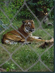 Fresno Zoo 038