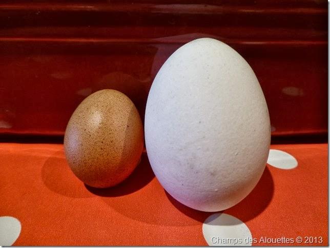 Champs des Alouettes: Chicken Eggs 1