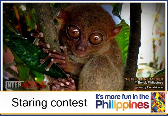 Staring contest with Tarsier