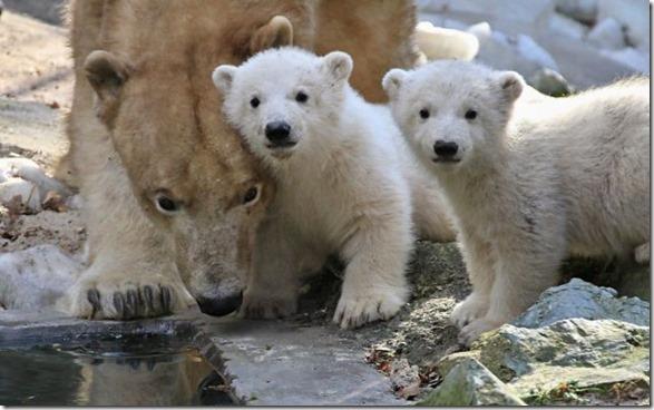 funny-animals-cute-2