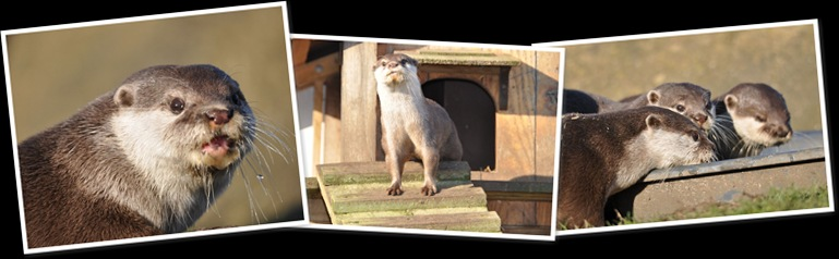 View Otters Feb 2012