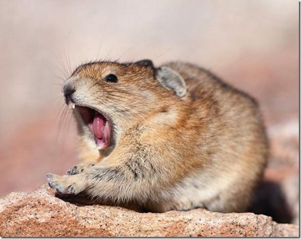 cute-funny-animals-23