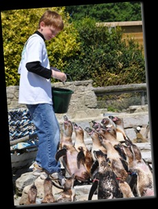 Lachlan feeding Penguins DSC_0391