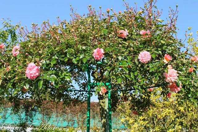 Monet's Garden 019-001