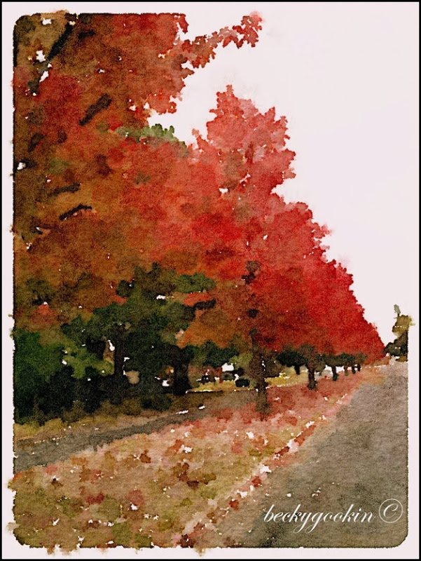 Waterlogue red tree avenue