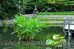 8 -Glória Ishizaka - Tokugawaen - Nagoya - Jp