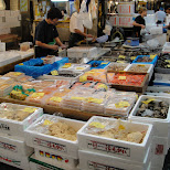 tsukiji fish market in Tokyo, Tokyo, Japan