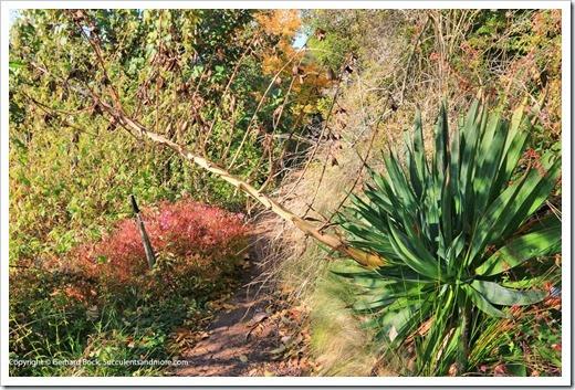 131230_UCBG_Beschorneria-albiflora_002