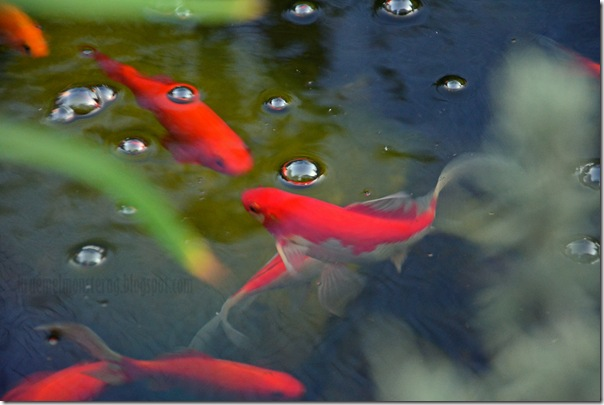 1 von 7 Sachen - Fische gefüttert