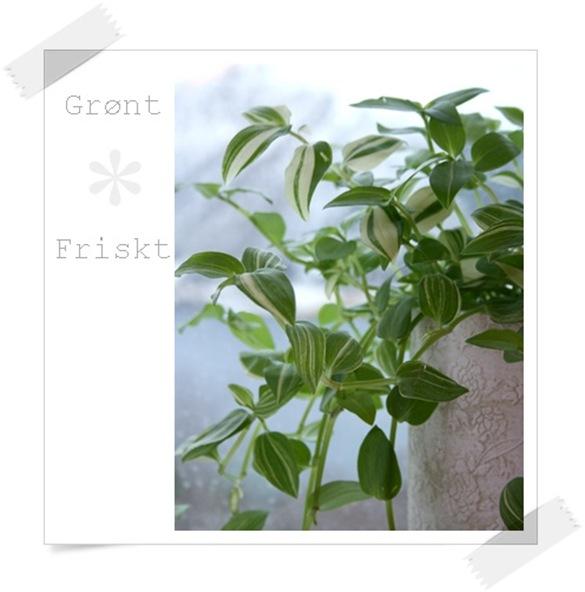 grøn glede1