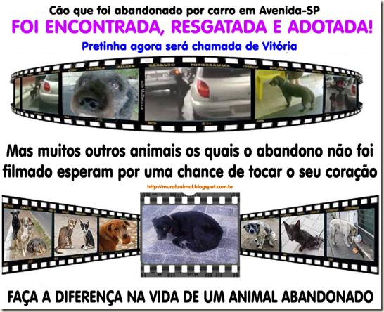 animais-abandonados