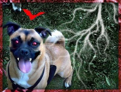 perros vampiro 1 (4)