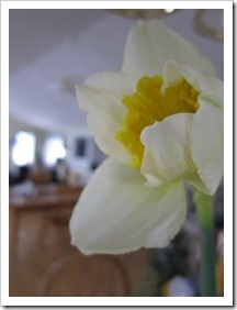 20120112_flowers_003