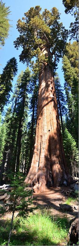 110914 Sequoia NP (6)