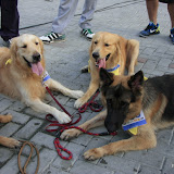 Pet Express Doggie Run 2012 Philippines. Jpg (238).JPG
