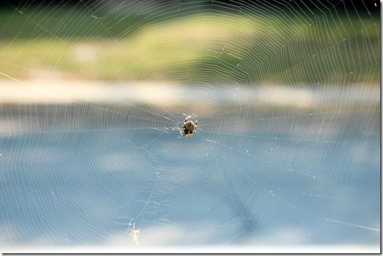 wowweb