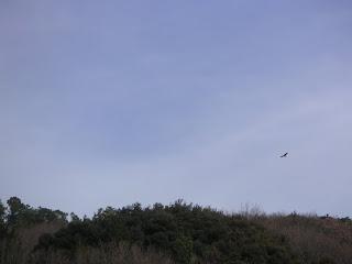 20130106-022.jpg