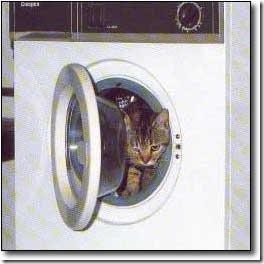 gatos lavadora (7)