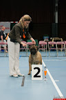 20130510-Bullmastiff-Worldcup-0896.jpg