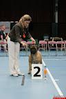 20130510-Bullmastiff-Worldcup-0896.jpg