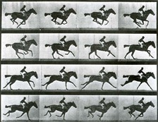 Muybridge - Sallie Gardner