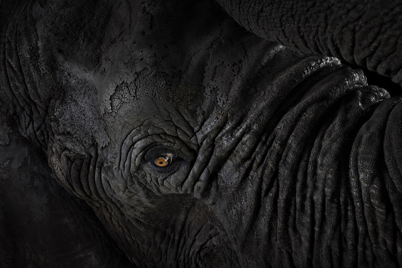 animal-photography-affinity-Brad-Wilson-elephant-4.jpeg