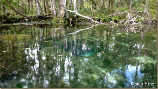 Chassahowitza River canoeing_186