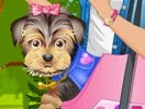 Personalizar cachorrinho