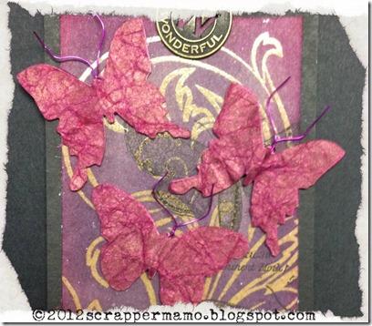 closeup butterflies w border