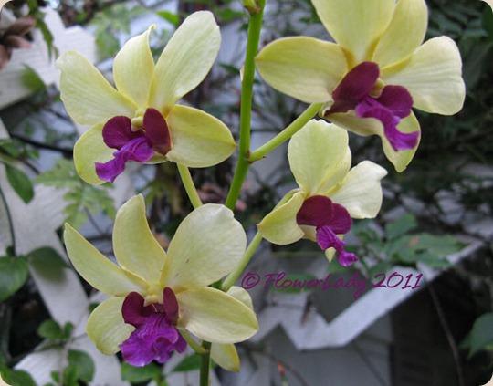 12-09-orchids