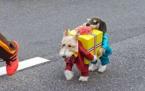 Собака в костюме грузчиков
