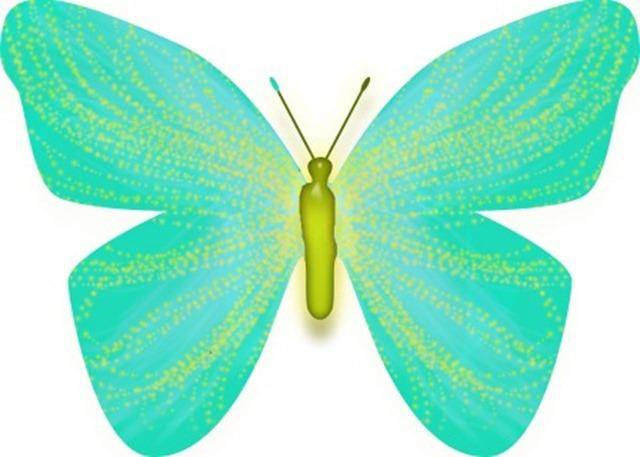 butterfly 4 WEB