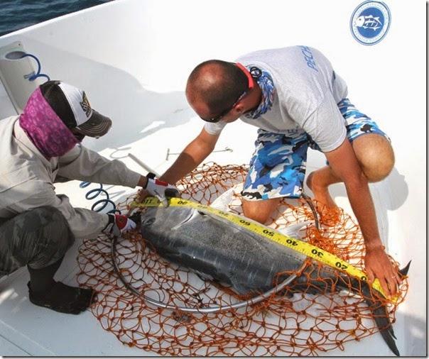 Gamefishing asia sri lanka updates telling the truth for Om fishing sinkers