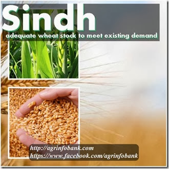 Sindh has adequate wheat stock to meet existing demand