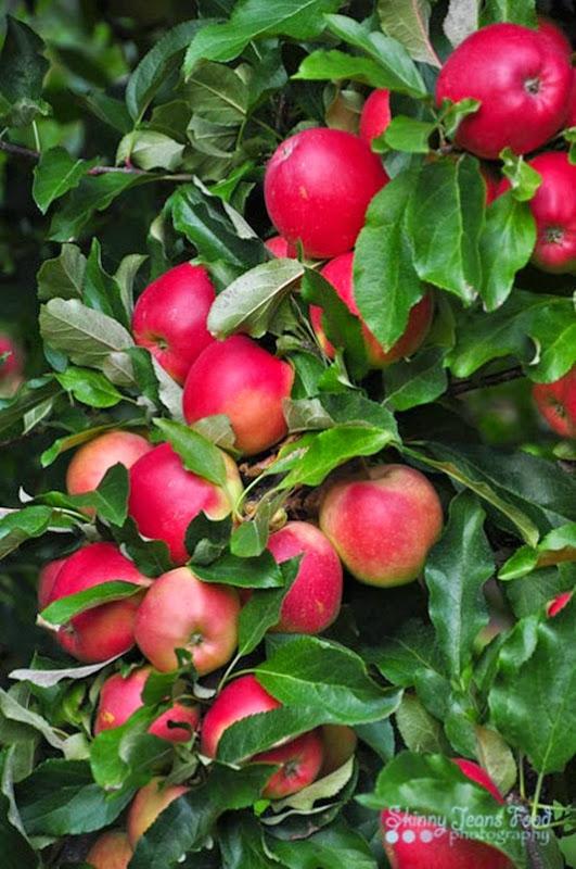 apples-1-3LRSJ